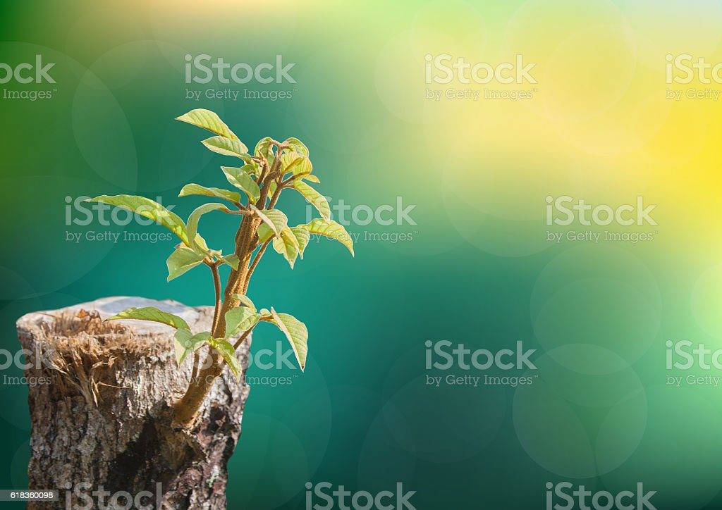 new life stock photo