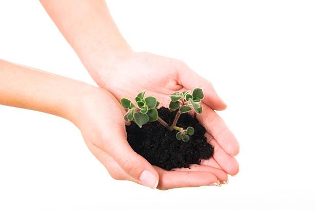 neues leben. plant und hand - scyther5 stock-fotos und bilder