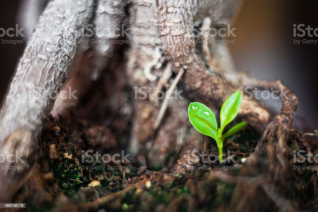 New life - small tree stock photo