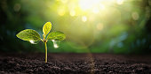 New Life Young Plant in Sunlight, Growing Plant, Plant Seedling. Spring Garden Concept