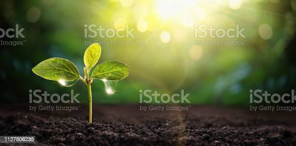 Photo of New Life Young Plant in Sunlight. Gardening