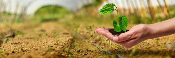 Nueva planta joven de la vida en la luz del sol, creciendo, seedling - foto de stock