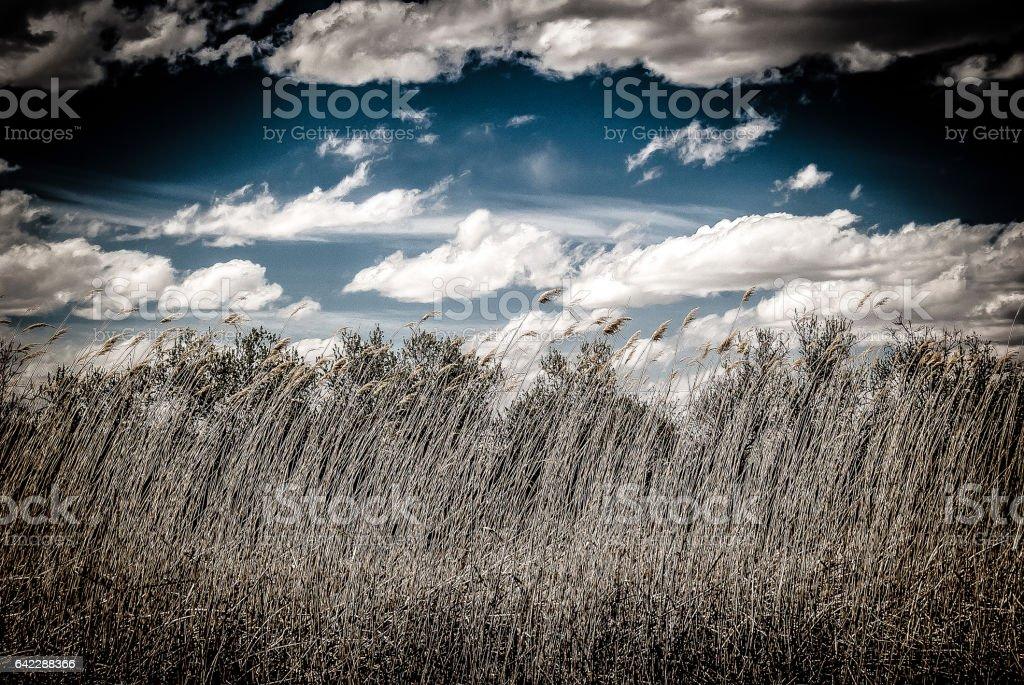 New mexico Prairie Grass stock photo