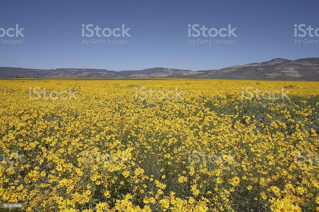New Mexico wildflowers stock photo