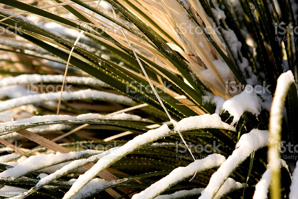 New Mexico Winter royalty-free stock photo