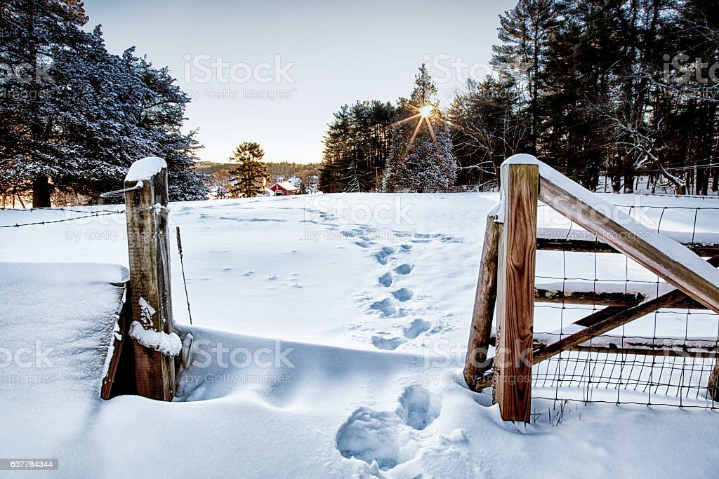 New Morning, New Snow stock photo