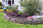 This garden terrace behind a slate rock wall has just been completely weeded and cleaned up with fresh mulch spread evenly on the ground surrounding ornamental bushes and flowers. See first related photo below for the comparison \