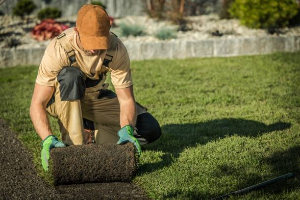 New Natural Grass Lawn Garden Lawn Technician Worker Installing New Natural Grass From Roll. landscaped stock pictures, royalty-free photos & images