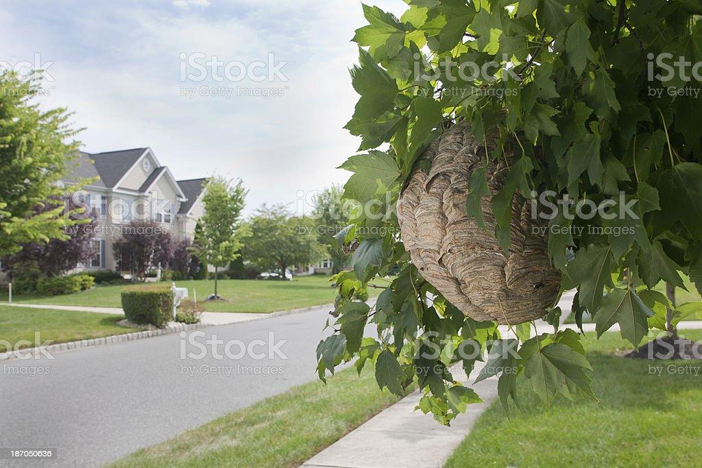 New Neighbors royalty-free stock photo