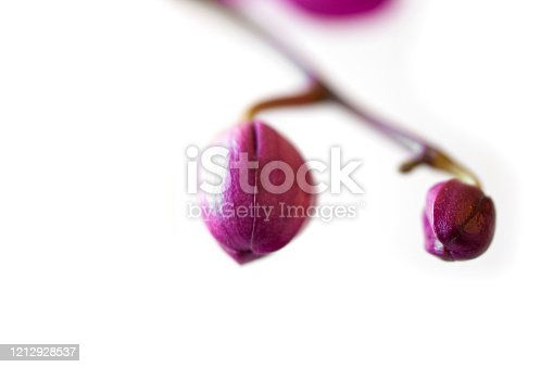 New orchid leaves isolated