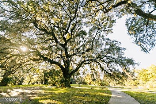 New Orleans City Park, Louisiana.
