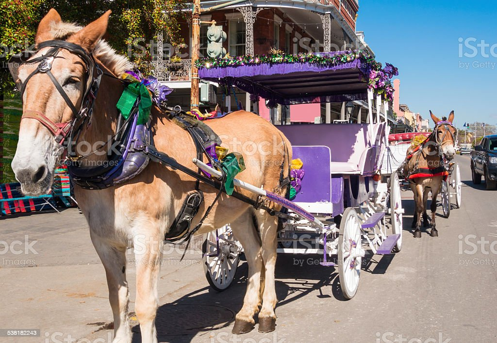 New Orleans Mule Drawn Carriages stock photo