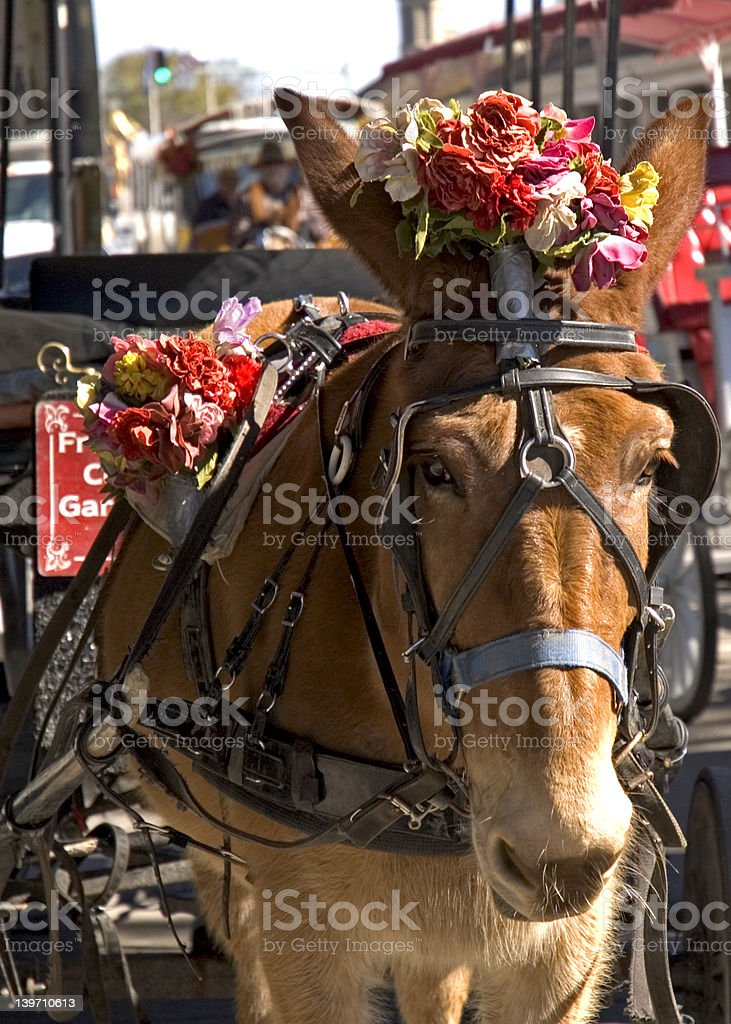 New Orleans Mule royalty-free stock photo