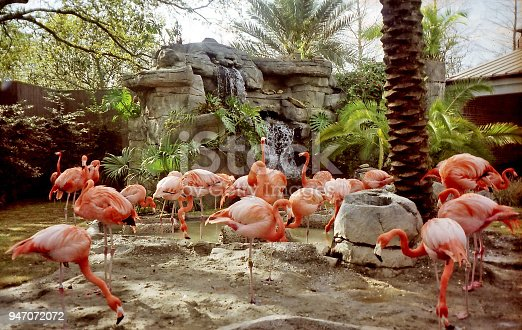 The flamingo in New Orleans, USA, March 25, 2002