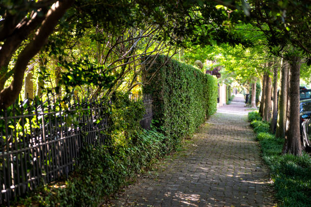 New Orleans, USA Old street historic Garden district in Louisiana famous town city with cobblestone sidewalk path tunnel in spring green color stock photo