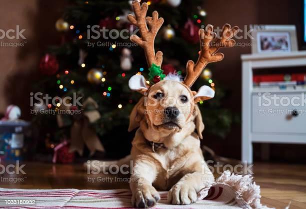 New pet for christmas picture id1033180932?b=1&k=6&m=1033180932&s=612x612&h=bltkad6e5abmhqu1onlq p9f0mwudmdh459zb9o2ymu=