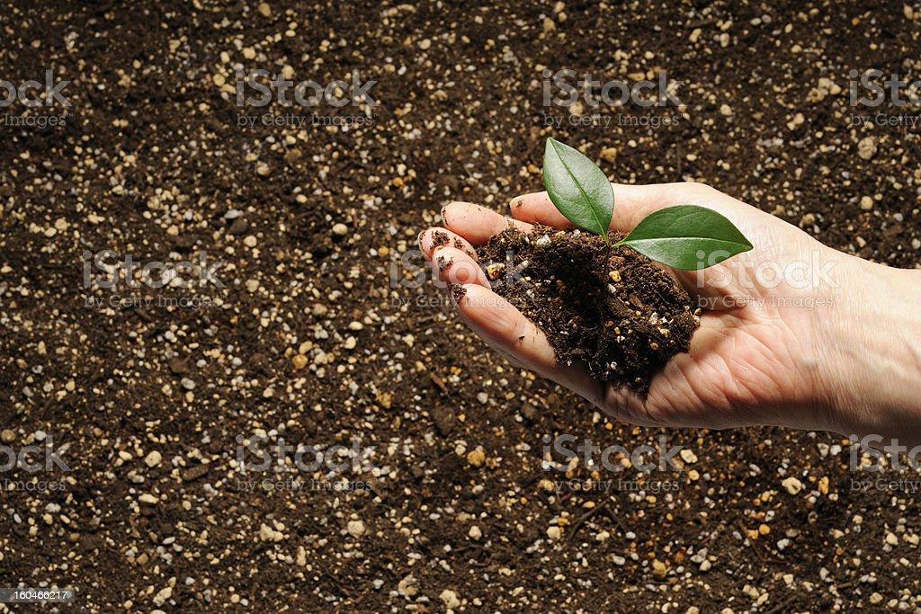 Neue wachsende Pflanze in der hand – Foto