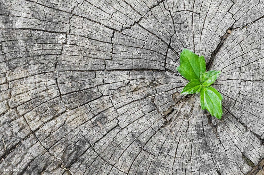 New plant growing out of a tree stump stock photo