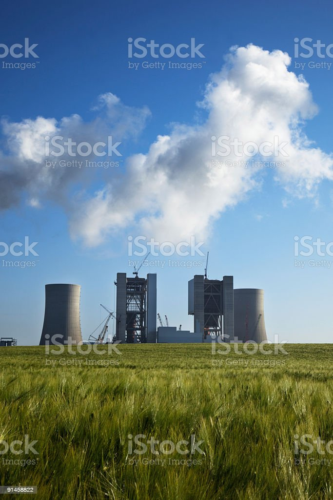 New plant in the field royalty-free stock photo