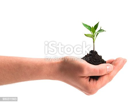 istock new plant w clipping path 93031563