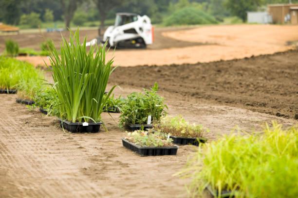 neue pflanzen für den kommerziellen gebäude feuchtgebiete landschaft - vorgarten landschaftsbau stock-fotos und bilder