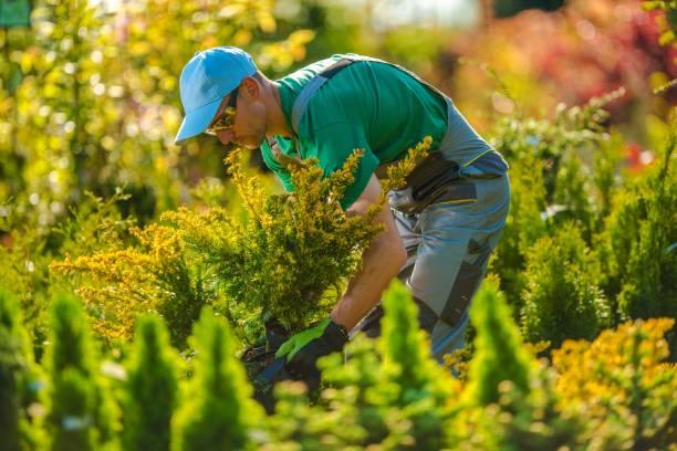 neue pflanzen für garten-projekt - gartenbau betrieb stock-fotos und bilder
