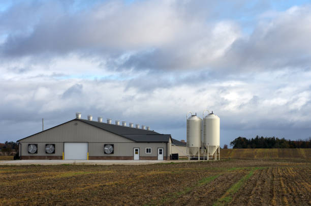 New Poultry Barn A newly constructed single story poultry barn in a rural setting. poultry stock pictures, royalty-free photos & images