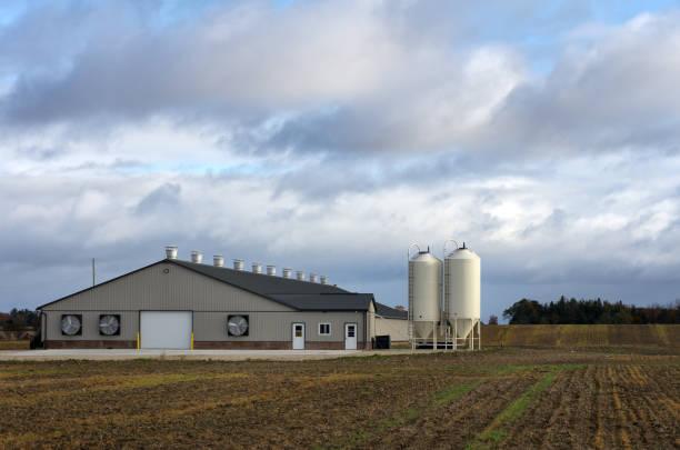 Nouveau bâtiment d'élevage des volailles - Photo