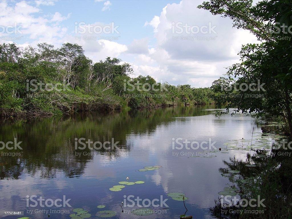 New river, Orange Walk. Belize royalty-free stock photo