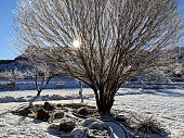 New snow in rock garden and South Mesa in Rockville Utah near Zion National Park Utah