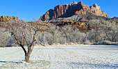New snow on pastures and apple tree along the Virgin River below Mt Kinesava in Zion National Park Utah