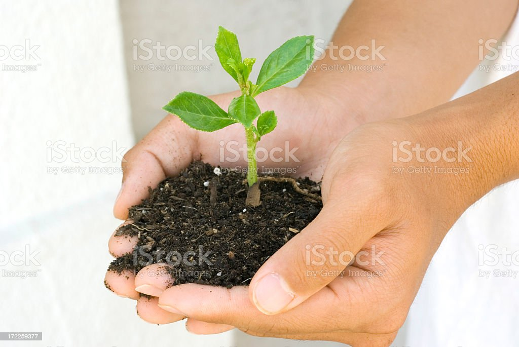 New Spring Growth royalty-free stock photo