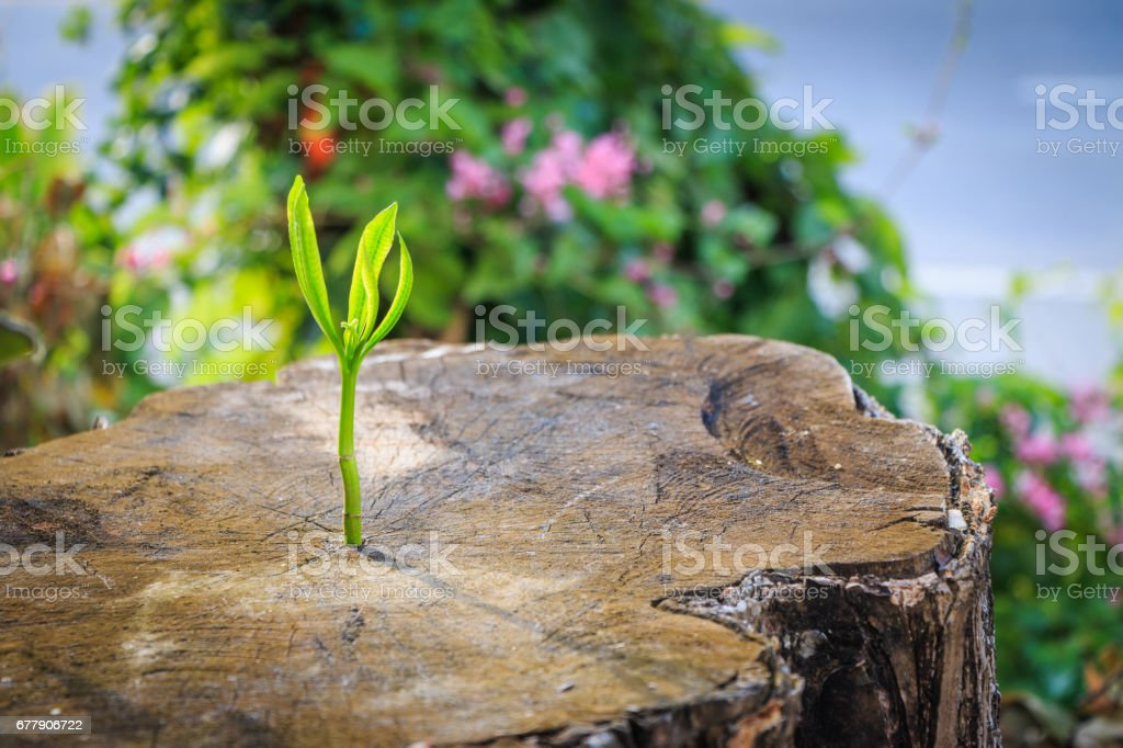 New tree growth up on dead stump tree royalty-free stock photo