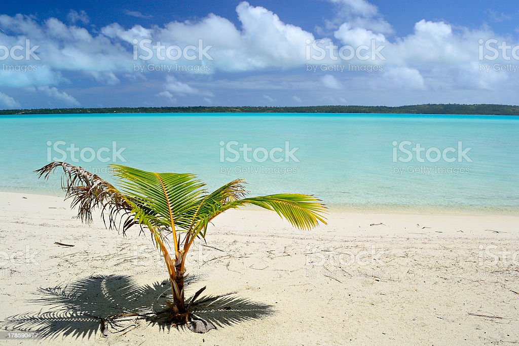 New tropical life royalty-free stock photo