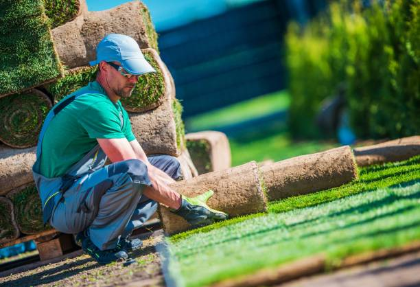 Turf Grass Neuinstallation – Foto