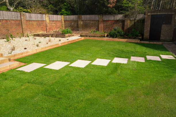 New turf installed around a stepping stone pathway in a garden or back yard. stock photo
