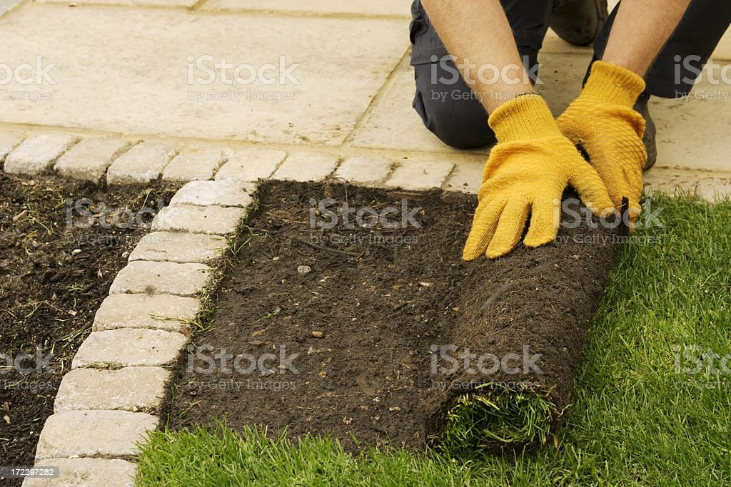 New turf stock photo
