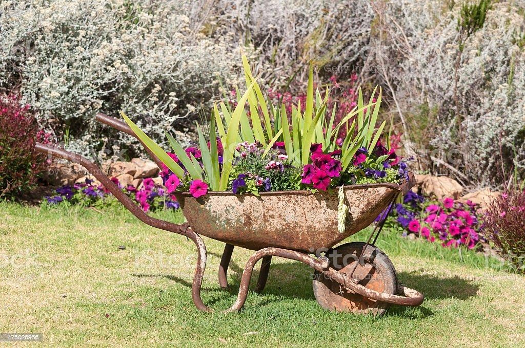 New use for an old wheelbarrow stock photo