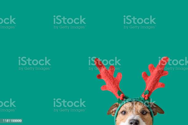 New year and christmas concept with dog wearing reindeer antlers picture id1181199999?b=1&k=6&m=1181199999&s=612x612&h=ex0rqfabinirj9vrrdcvb lyv5isd1shg ym1yza1uw=