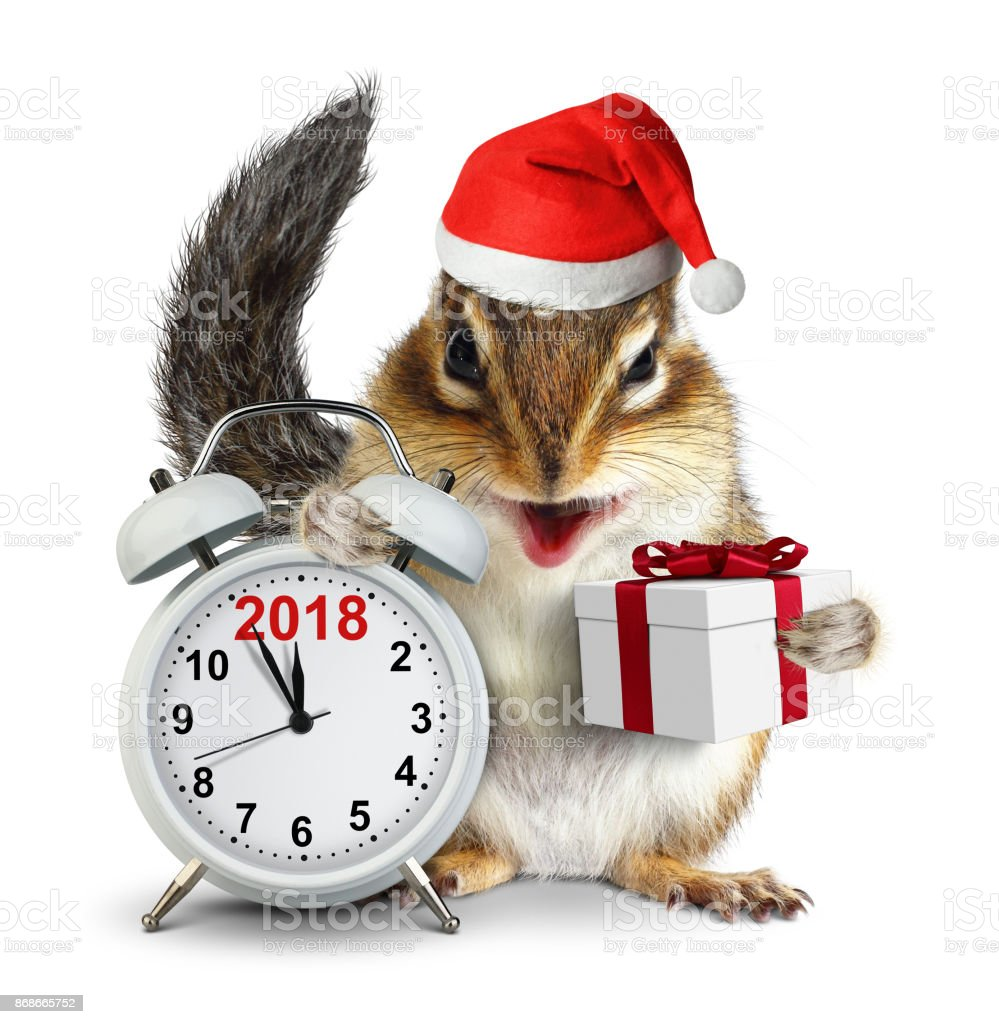 2018 New year concept, funny Chipmunk in red Santa hat with clokc and gift stock photo