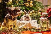 istock New year dog and rabbit Christmas tree. Biewer Terrier under garland Prasanthi 1296096008