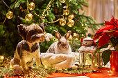 istock New year dog and rabbit Christmas tree. Biewer Terrier under garland Prasanthi 1315918080