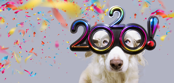 new year dog pet  that looks like goat wearing colorful 2020 text glasses. isolated on white background with confetti falling.