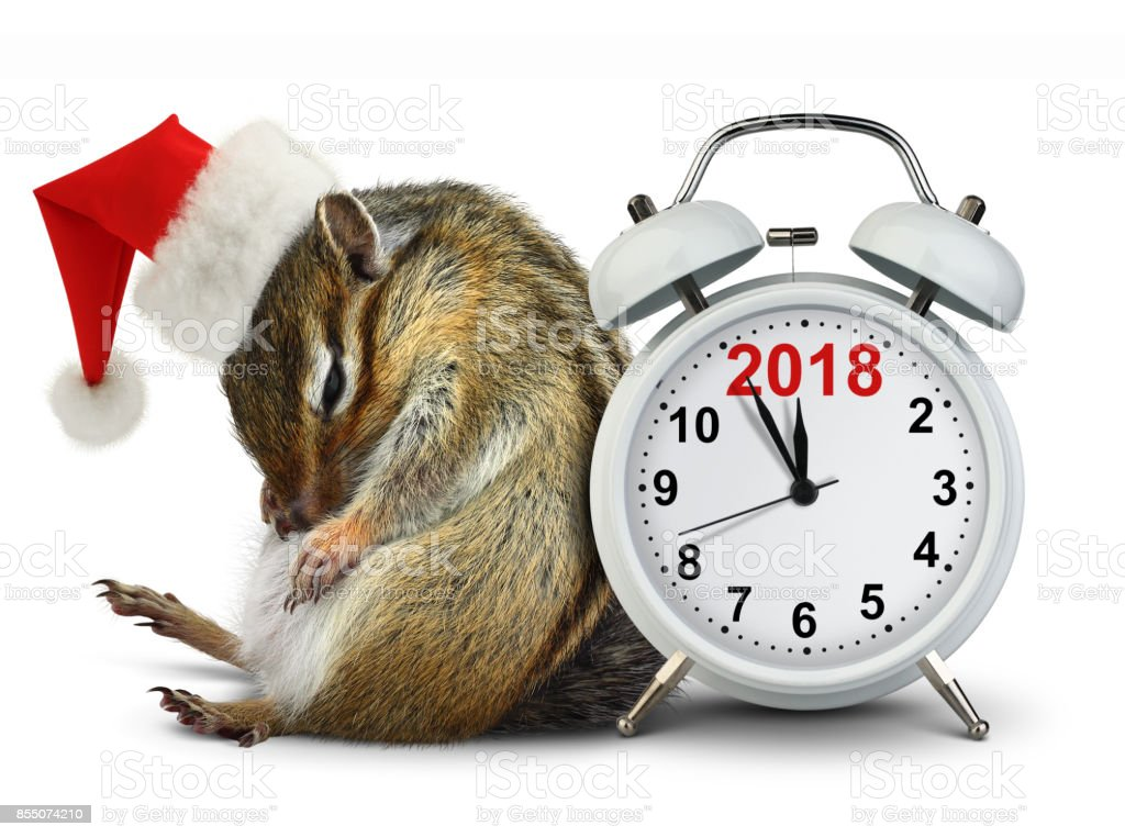 2018 New year, funny Chipmunk in red Santa hat with clock stock photo