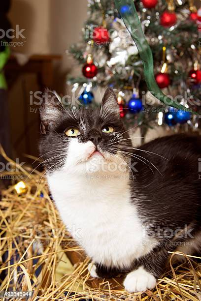 New year kitten with christmastree decorations picture id498345944?b=1&k=6&m=498345944&s=612x612&h=vzpednlz2k x0cndsw5nkojqbb72utnct2ytkrxezsc=