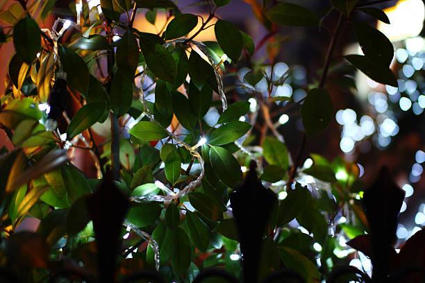 new jahr light - lichtschlauch stock-fotos und bilder