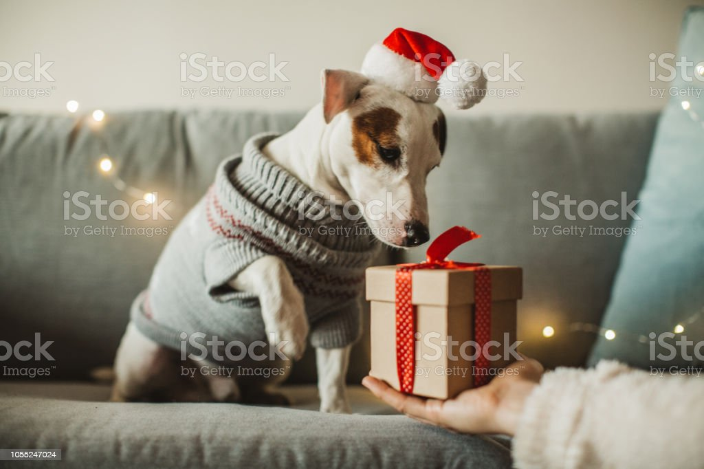 New year present for dog stock photo