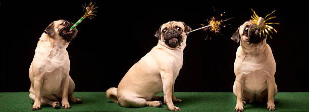 silvester-feier - silvester mit hund stock-fotos und bilder