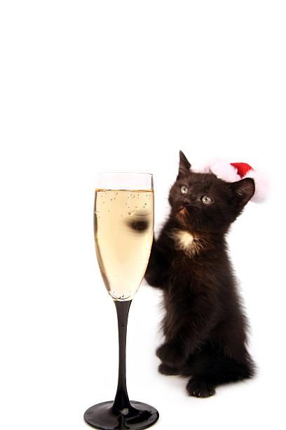 New years kitten picture id172395108?b=1&k=6&m=172395108&s=612x612&w=0&h=xhsh6uxdqsl7ndbgruv6ssbhnmebcvaramyrgwi tga=