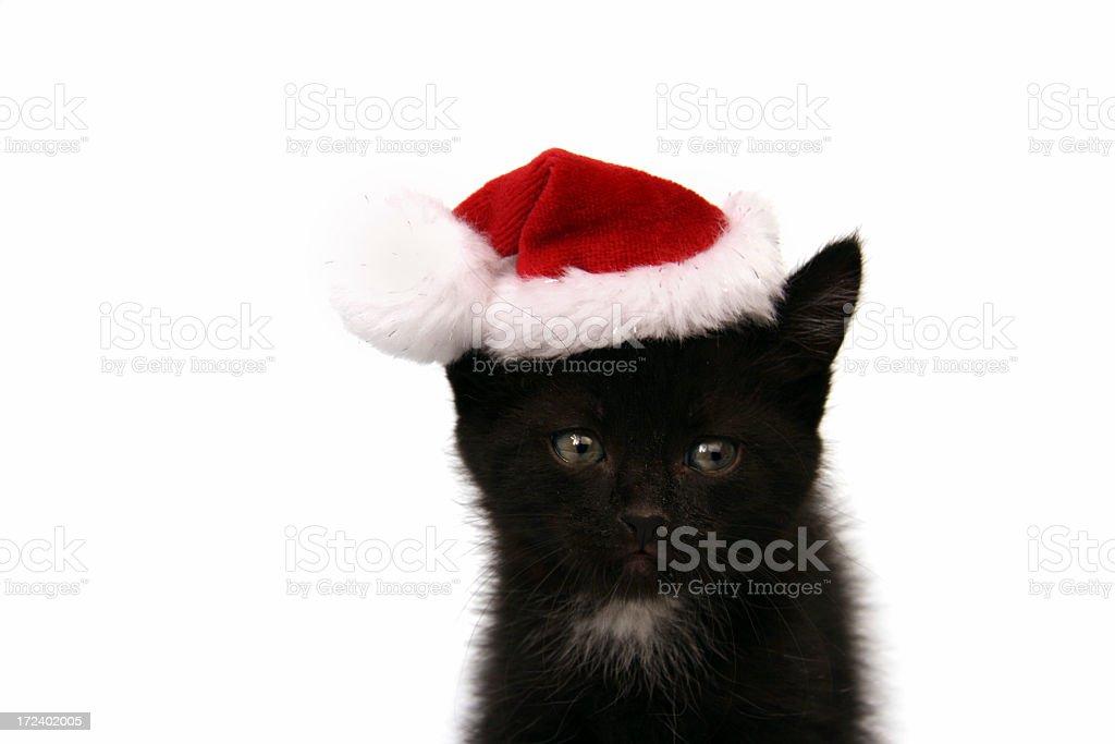 New Year's kitten stock photo